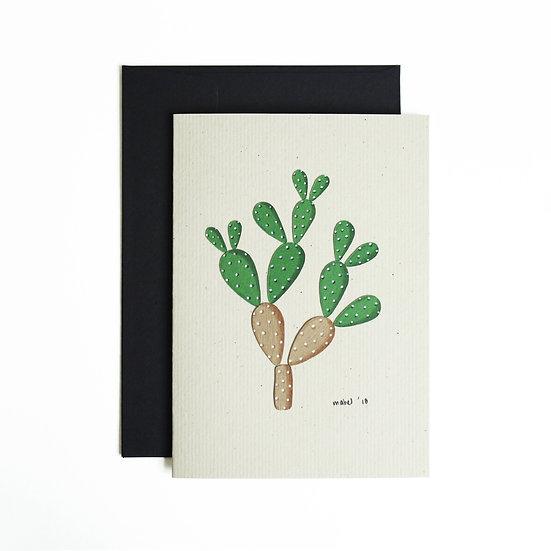 A6 Bunny Ears Cactus
