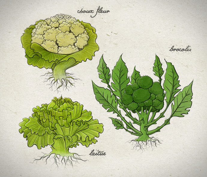 legume3