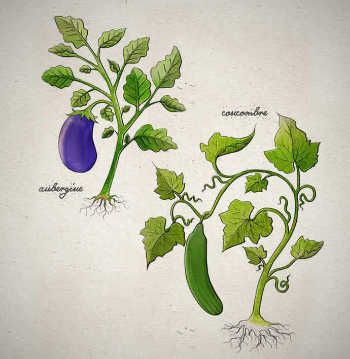 legume5