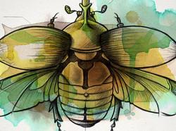 Coleoptera1