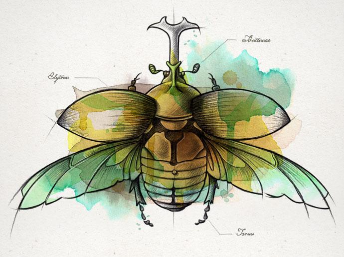 Coleoptera2