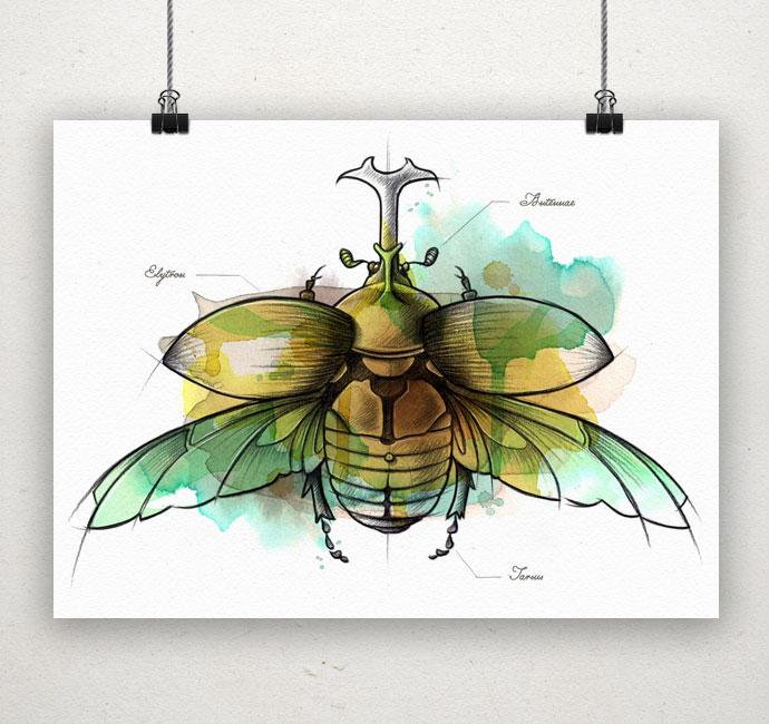 Coleopteraprint
