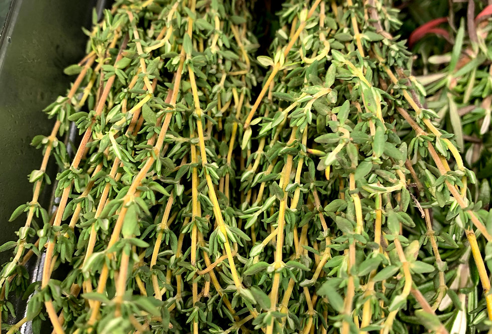 Fresh thyme, bunched