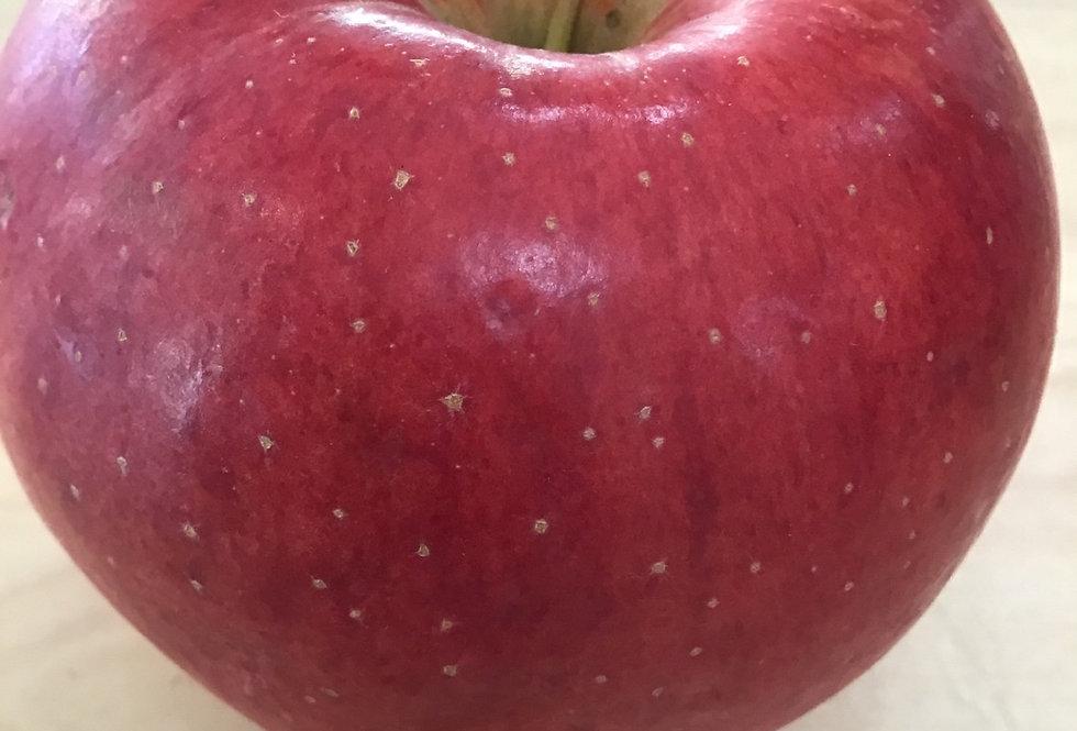 Gala Apples, ON