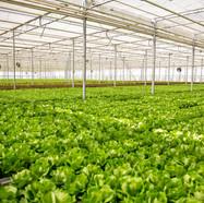 agroindustrial-cicerd-amcham