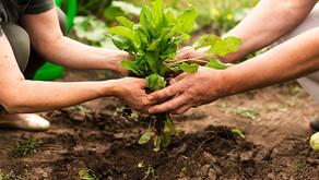 Acciones para impulsar el agro ante COVID-19