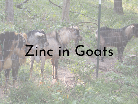 Zinc for Goats: A Mineral Especially Important in Breeding Season