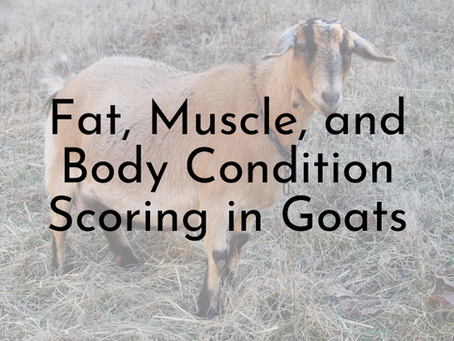 Fat, Muscle, and Body Condition in Goats