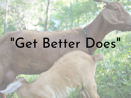 """""""Get Better Does"""""""