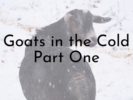 Goats in the Cold Part One - How Goats Keep Warm Naturally and Supplemental Heat Options