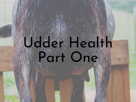 Udder Health Issues - Part One - Mastitis