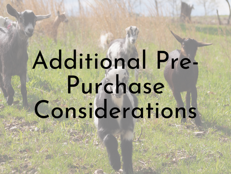 Pre-purchase Considerations