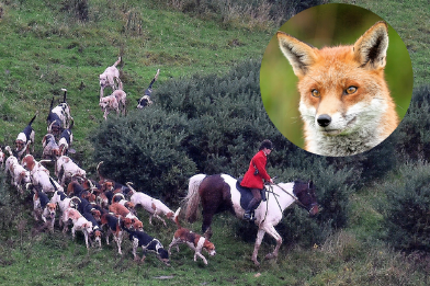 Foxhunt4.png