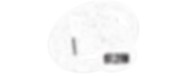 rr white logo header.png