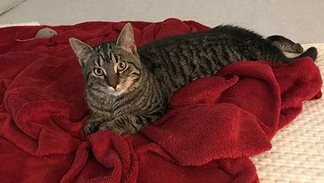 Tamara on red blanket.jpg