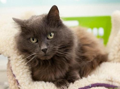 Sponsor a Senior Cat's Adoption Fee (10 - 15 years)