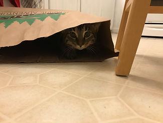 Tamara in paper bag (1).jpg