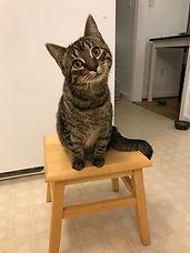 Tamara too cute on step stool (1).jpg