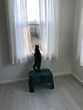 Tamara looking out window.jpg