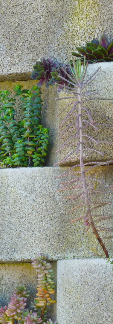 BLOOMWALL - NATURAL VERTICAL GARDEN - JARDINS VERTICAIS NATURAIS