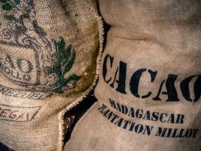 Die Verarbeitung der Kakaobohne