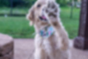 Contact Page Dog Boarding Photo