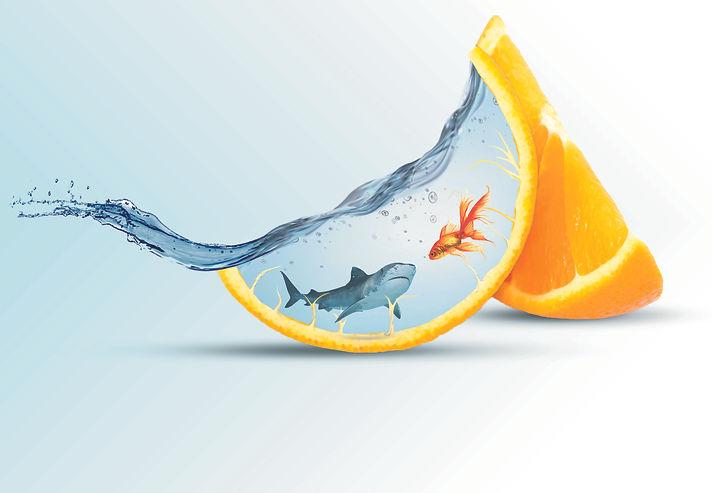 fish-3619038.jpg
