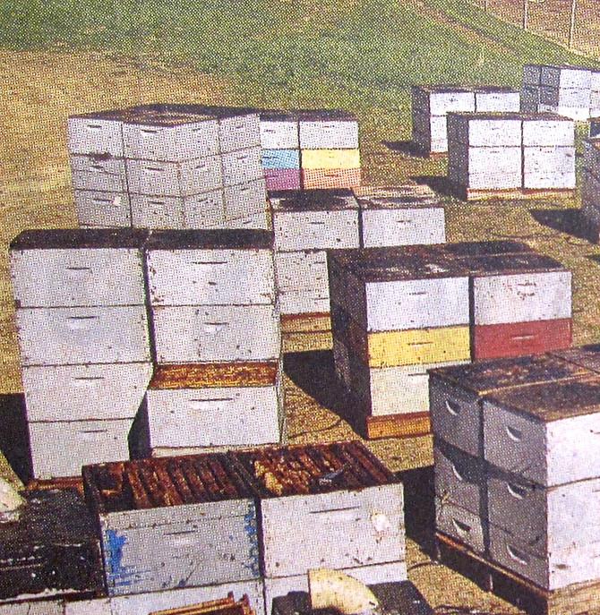 Beekeeping, Pennsylvania, 2006 (altered photo)