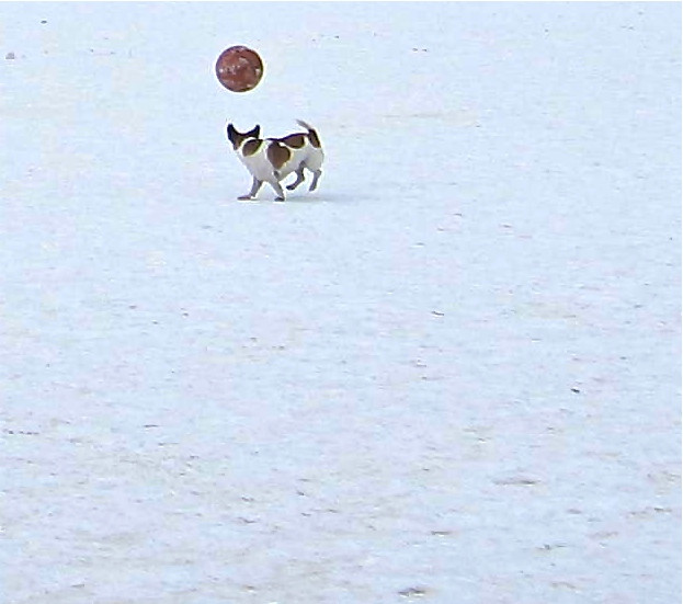 Dog on ice, Aspen, Colorado, 2012 (photo by Greg Colson)