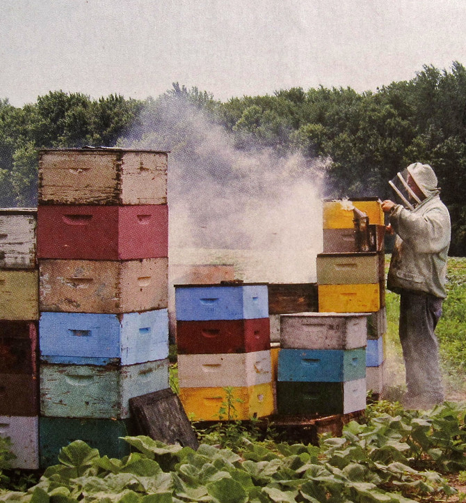 The Beekeeping Business (photo by Hannah Whitaker)