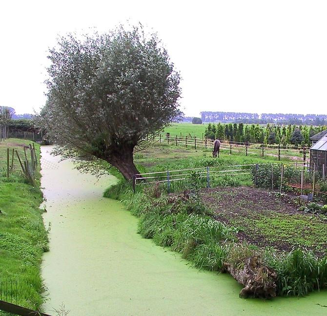 Farm Near Giessendam, The Netherlands (photo by Greg Colson)