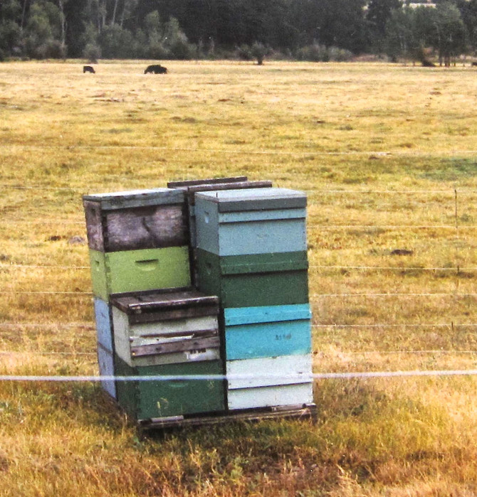 Beekeeping (photo by Jeff Colson)
