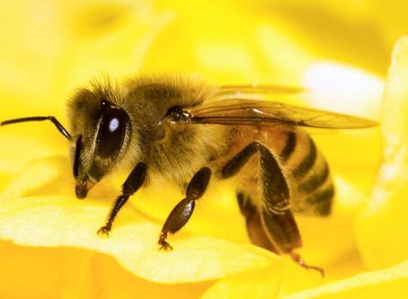 Honey Bee/ Farmer Network