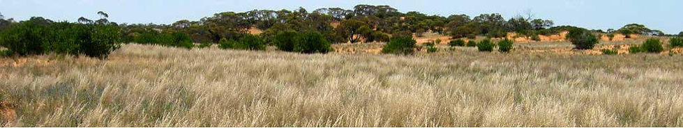 Annual Report, fact sheets, The Mallee in Flower, biodiversity plan, Strategic Plan