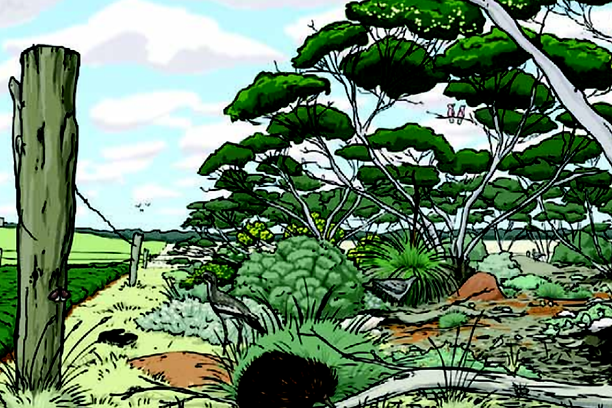 SA Murray Mallee, mallee futures, biodiversity,
