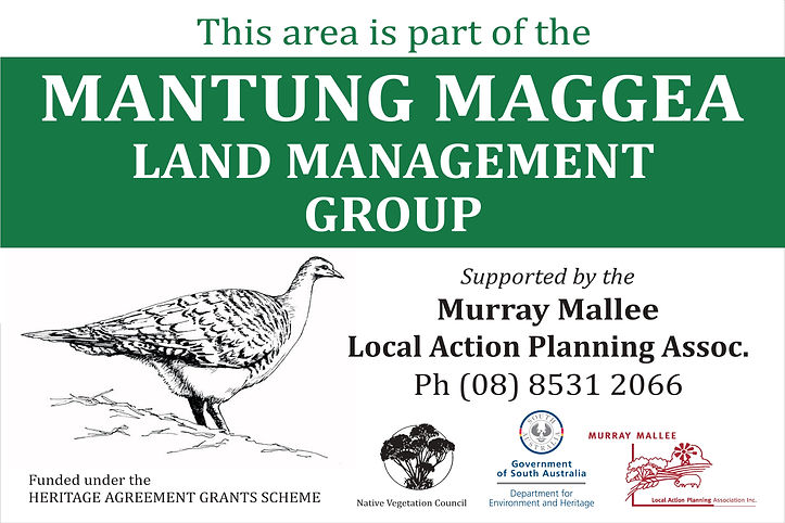 Mantung Maggea Land Management Group, Malleefowl, SA Murray Mallee