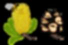 Honeybee Banksia.png