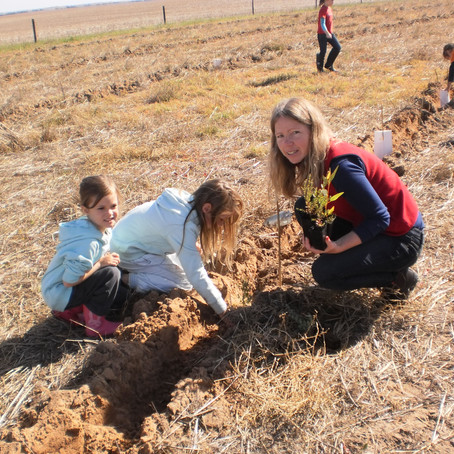 Students Help Get Trees In The Ground