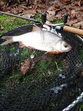 fisheries roach.jpg