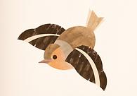 Bird Flying WEB.png