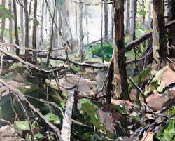 Danses forêt dense