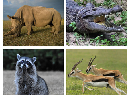 What's Your OCR Spirit Animal? QUIZ