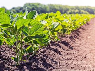 Rondônia deve produzir 4,4 mil toneladas de feijão na safra 2020/2021