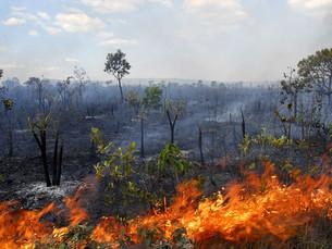 Rondônia lança operação para combater incêndios florestais em áreas críticas