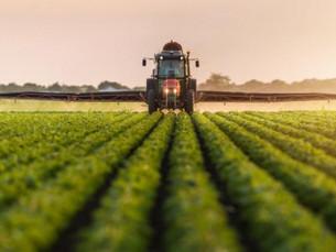 Crescimento do setor agrícola impulsiona culturas na pecuária rondoniense