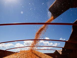 Conab revisa para baixo projeção das culturas de 2ª safra no país