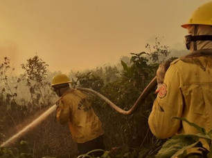 ESPECIAL: A rotina de brigadistas no maior incêndio em décadas no Pantanal