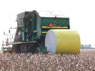 Evento marca início da colheita de algodão em Rondônia