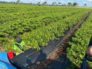 Produtividade do agronegócio de Rondônia chama a atenção de outros estados