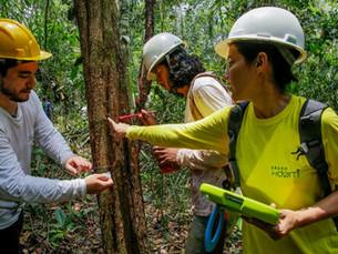 Inventário florestal da Resex do Rio Cautário revela espécies nobres